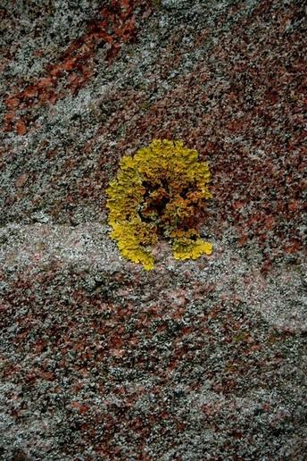 """Felikso Kerpausko darbas iš serijos """"Pražydę akmenys""""."""