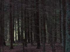 """Vidmanto Ilčiuko fotografija  iš serijos """"Miškas"""" Nr. 4; 2004 m."""