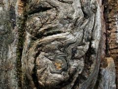 """Feliksas Kerpauskas. Fotografija iš serijos """"Medžių žaizdos"""". Fotografija atspausta ant drobės, aptraukta ant porėmio ir paruošta pakabinimui. 300 €"""