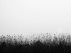 """Indrė Bagdonė fotografija iš serijos """"Siluetai"""""""