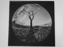"""Fragmentai iš I. Švelnio parodos """"Medžių grafika' Šiauliuose, fotografavo Gražina Pašakarnienė"""